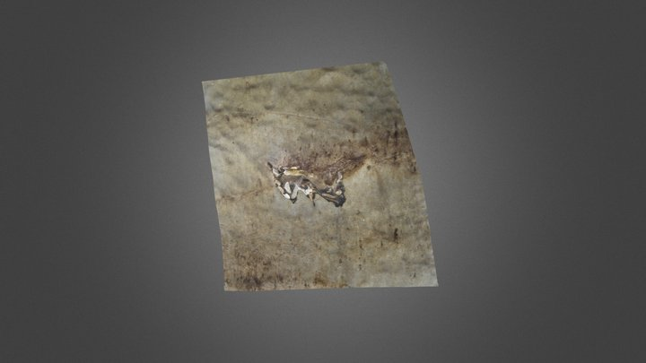 PPUR Sirenia fossil 3D Model
