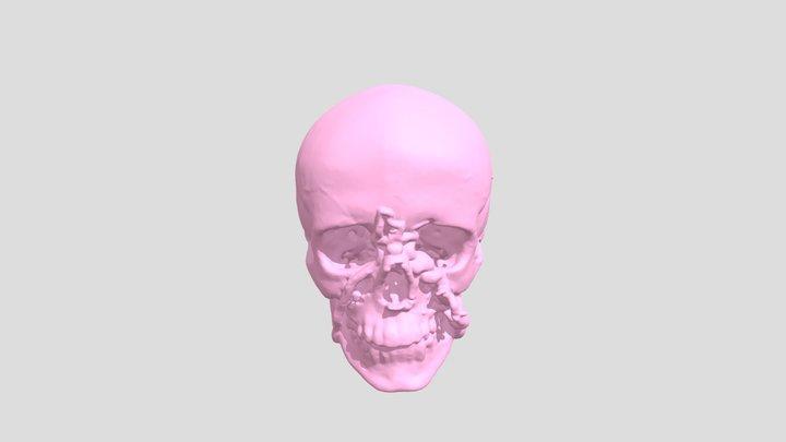 Skull02 3D Model