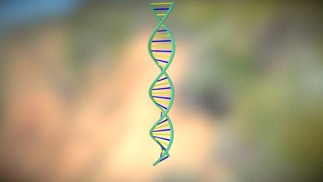 DNA Project 3D Model