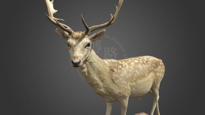 NSMT-M32070_Fallow Deer_ダマジカ_Taxidermy 3D Model