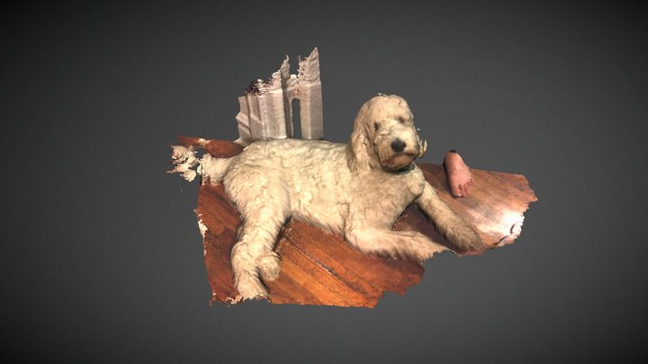 Charlemagne the labordoodle 3D Model