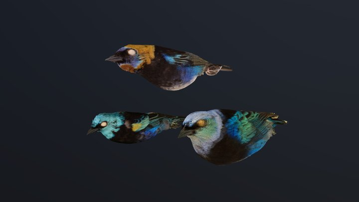 Automated annotated tanagers 3D Model