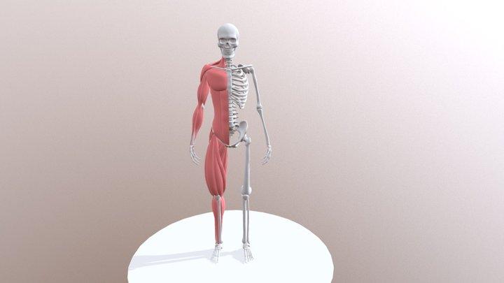 Esqueleto curricular del REA 3D Model