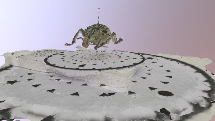 Weevil 3D Model