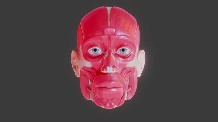 Full Head Muscle Anatomy 3D Model