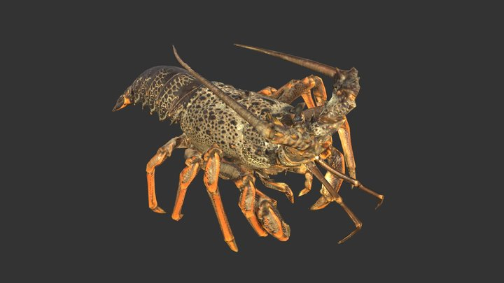 Crayfish - Artec Spider 3D Model