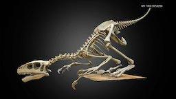Dinosaur skeleton - Paris 3D Model