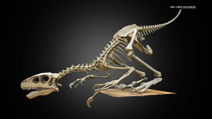 Dinosaur skeleton - Paris 3D Model