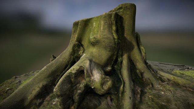 Stump_03 3D Model