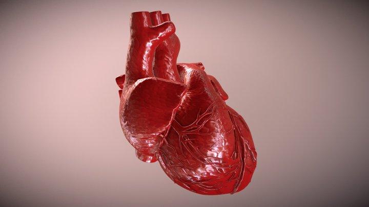 Animated Heart 3D Model