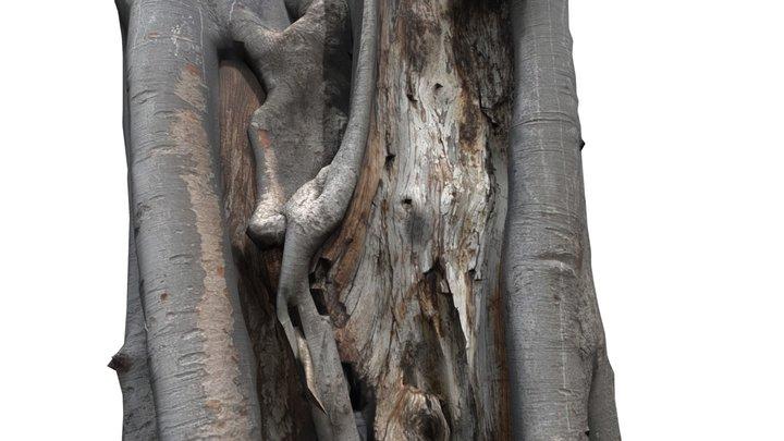TREE TRUNK #11 3D Model