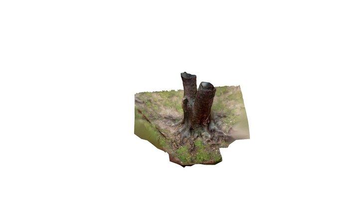 Outdoor 3D Model