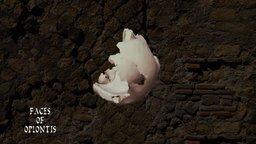 Oplontis B - Skull D 3D Model