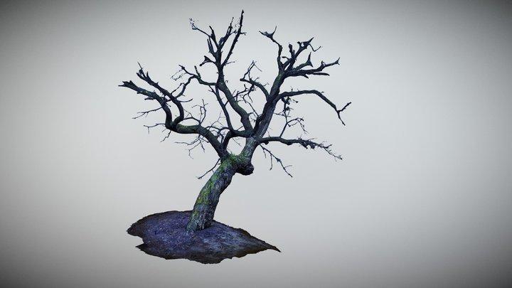 Tree Scan Free 3D Model