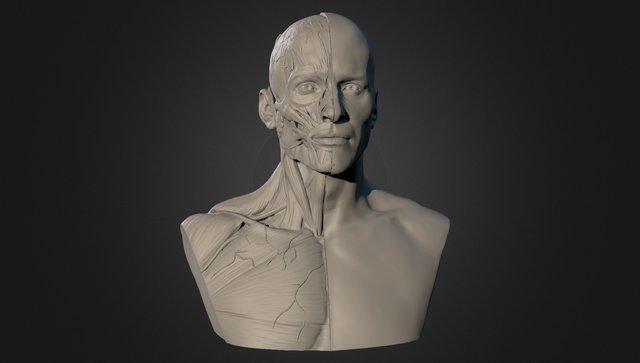 Semana 02 - Man Ecorche 3D Model