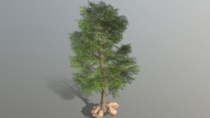 Low Poly Broadleaf Tree 3D Model
