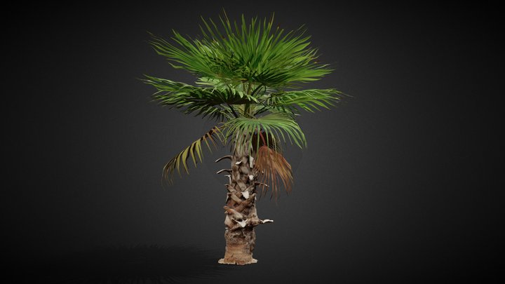 Palmtree_A17 3D Model