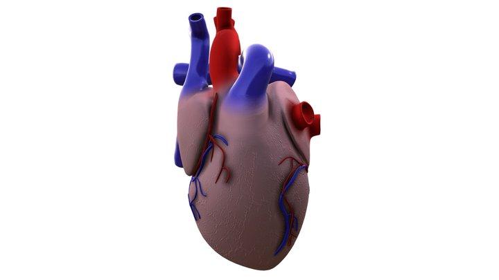 Simple Heart Model 3D Model