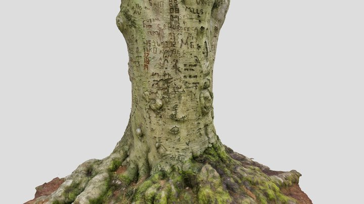 Tree with initials and carvings in Cannock Chase 3D Model