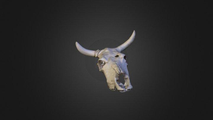 CowSkull 3D Model