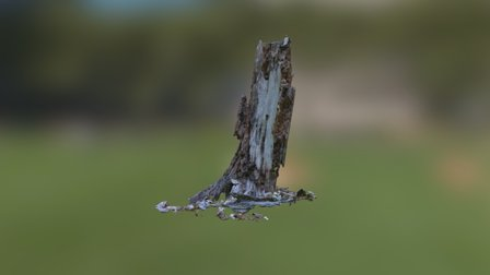 Photogrammetry Test Tree 002 Reduced 3D Model