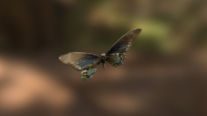 Pipevine Swallowtail 3D Model