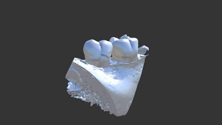 Frag. żuchwy 3D Model