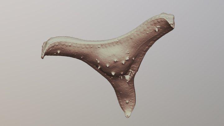 Diatom 3D Model