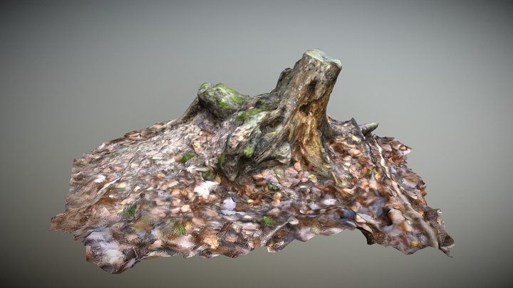 Tree Stump 3D Model
