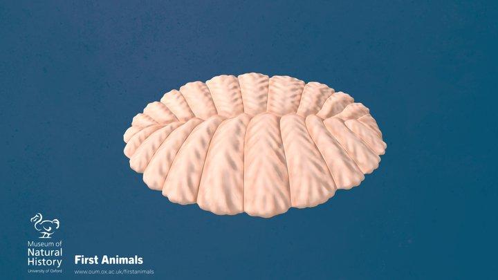 Fractofusus andersoni 3D Model