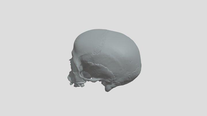 Print version, skull/kranium, stenålderskvinna 3D Model