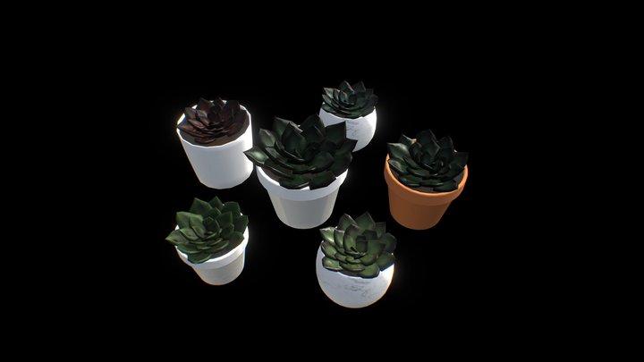 Succulent Echeveria Plant Pack 3D Model