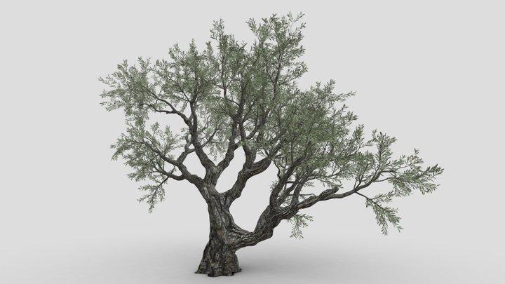 Tree-S11-Live Oak 3D Model