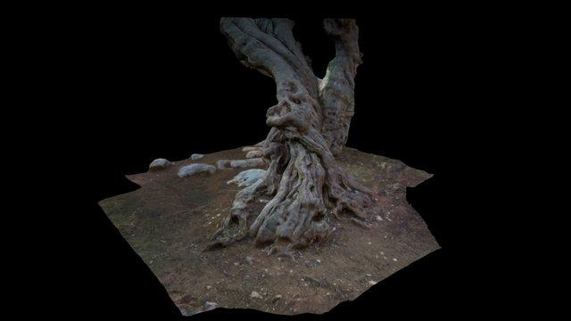 Ulivo secolare 3D Model