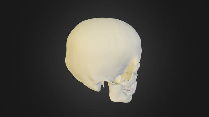 череп и одна пластина 3D Model