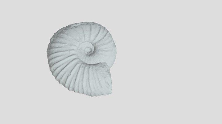 Ammonite Full 360 Blender 3D Model