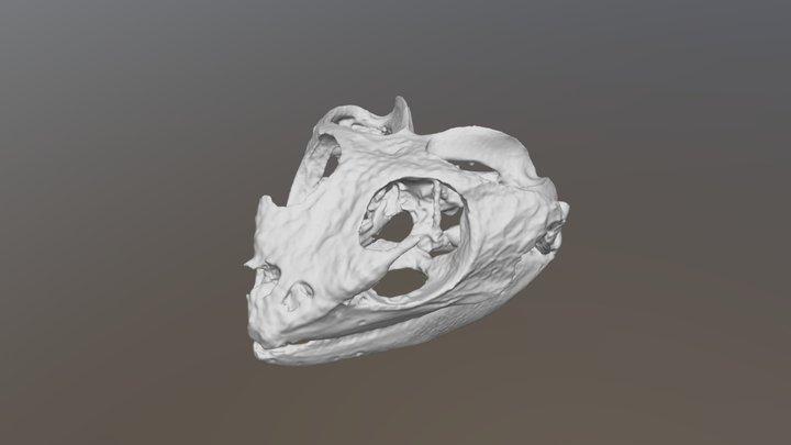 Bearded Dragon Skull (VCU_3D_3997) 3D Model