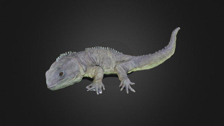 Vertebrate: Tuatara (Sphenodon) 3D Model