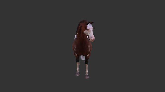 Warmblood Horse 3D Model