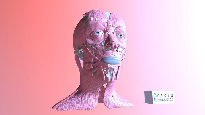 Músculos Indicados e Action Units 2.0 (MIAU 2.0) 3D Model