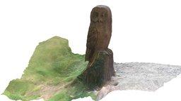 UPDATED Muncaster Castle Great Grey Owl, Cumbria 3D Model