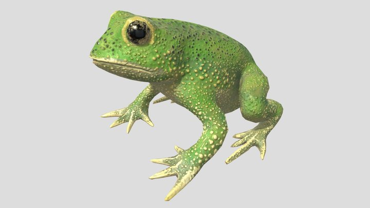 Low Poly Green Toad 3D Model