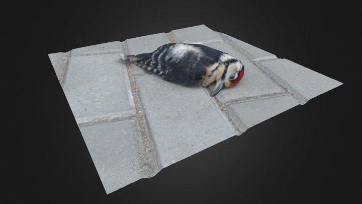 Dead Bird 3D Model