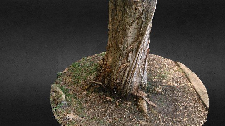 Paperbark (melaleuca) Tree Trunk (rough scan) 3D Model