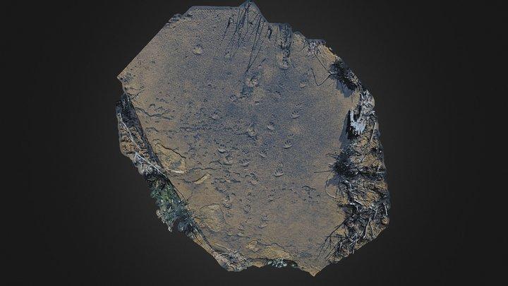 Fossil Tracks