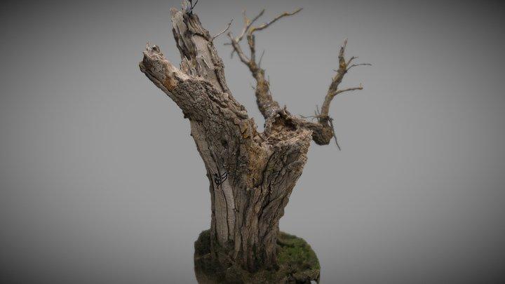 Arbre mort - Dead tree 3D Model