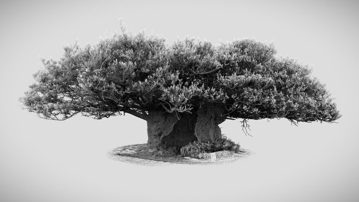 The Queen Elizabeth oak, Cowdray Park 3D Model