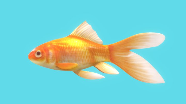 Goldfish 3D Model