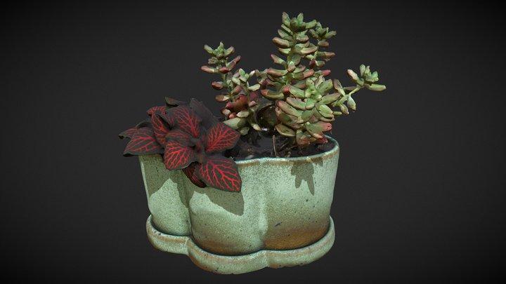Plantasia (1) 3D Model