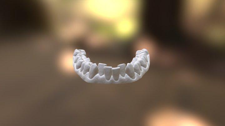 Clayton Lower Jaw 3D Model